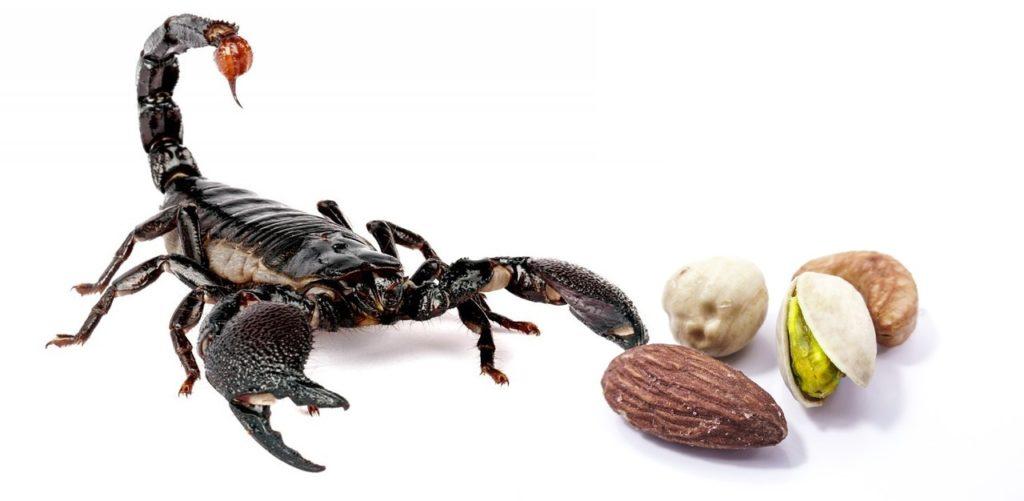 Jak zmniejszyć apetyt - zdjęcie skorpion